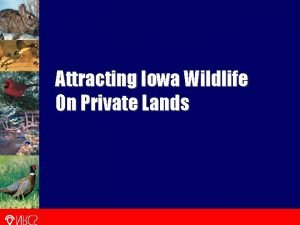 Attracting Iowa Wildlife On Private Lands Attracting Iowa