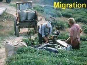 Migration Migration Terms Immigration vs Migration Emigration vs