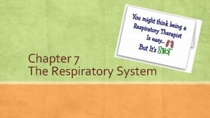 Chapter 7 The Respiratory System Meet The Lungs