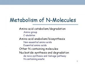 Metabolism of NMolecules Amino acid catabolismdegradation Amino group