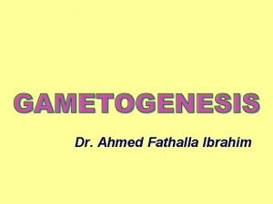 Dr Ahmed Fathalla Ibrahim MITOSIS DIFFERENCE BETWEEN MITOSIS