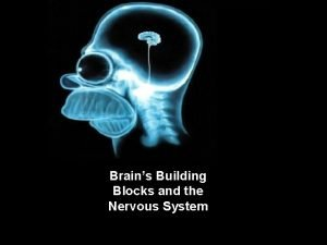 Module 3 4 Brains Building Blocks and the