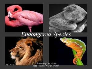 Endangered Species 9102020 C Fiammenghi e B Ravani