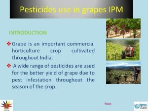 Pesticides use in grapes IPM INTRODUCTION v Grape