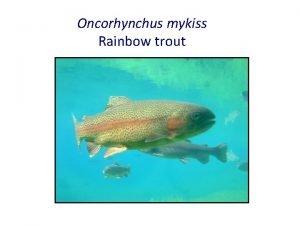 Oncorhynchus mykiss Rainbow trout External Anatomy Tail Trunk