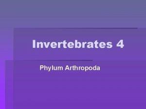 Invertebrates 4 Phylum Arthropoda Phylum Arthropoda jointed foot