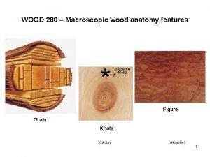 WOOD 280 Macroscopic wood anatomy features Figure Grain