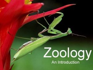 Zoology An Introduction Zoology Study of animals In