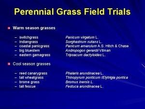 Perennial Grass Field Trials Warm season grasses switchgrass