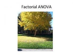 Factorial ANOVA Corn Corn No water Corn No