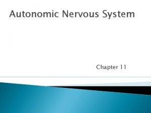 Autonomic Nervous System Chapter 11 Comparison Somatic systems