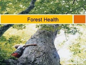 Forest Health What is Forest Health DEFORESTATION Deforestation
