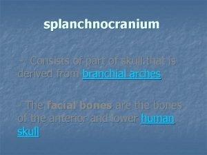 splanchnocranium Consists of part of skull that is