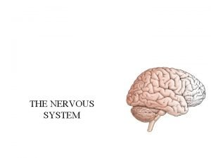 THE NERVOUS SYSTEM Divisions of the nervous system