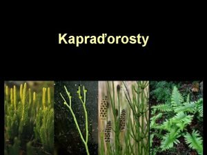 Kapraorosty Evolun vztahy kapraorost Zosterophyllophyta Rhyniophyta Lycopodiophyta Psilophyta