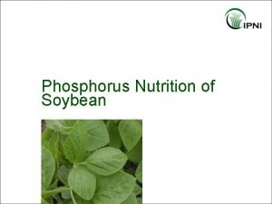 Phosphorus Nutrition of Soybean Outline P Nutrition of