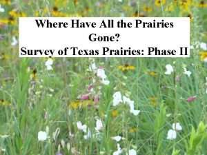 Where Have All the Prairies Gone Survey of