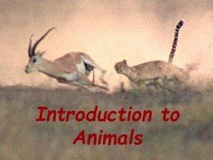 Introduction to animals Introduction to Animals Characteristics of