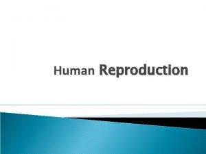 Human Reproduction Fertilization Fertilization is the fusion of