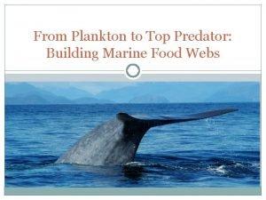 From Plankton to Top Predator Building Marine Food