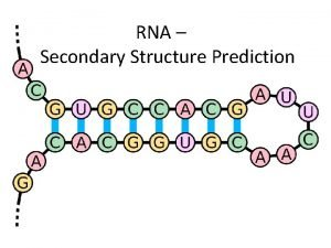 RNA Secondary Structure Prediction RNA role in organisms