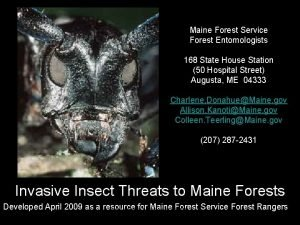 Maine Forest Service Forest Entomologists 168 State House