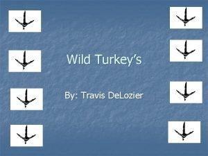 Wild Turkeys By Travis De Lozier Wild Turkey