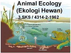 Animal Ecology Ekologi Hewan 3 SKS 4314 2