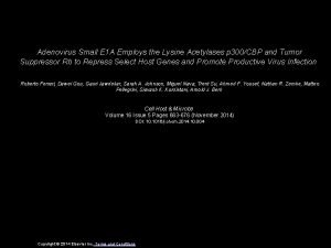 Adenovirus Small E 1 A Employs the Lysine