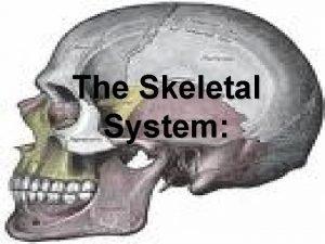 The Skeletal System The Skeletal System Parts of