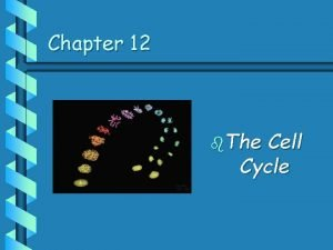 Chapter 12 b The Cell Cycle Cell Division