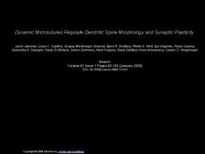 Dynamic Microtubules Regulate Dendritic Spine Morphology and Synaptic