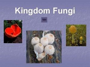 Kingdom Fungi Where are fungi found Everywhere n