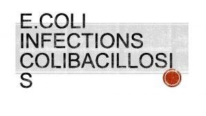 Avian pathogenic E coli APEC Gram negative Rod