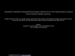 Vasoactive Intestinal PolypeptideExpressing Interneurons in the Hippocampus Support