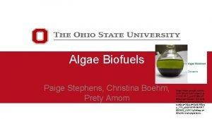 Algae Biofuels Paige Stephens Christina Boehm Prety Amom