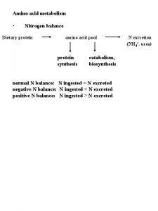 Amino acid metabolism Nitrogen balance Dietary protein amino