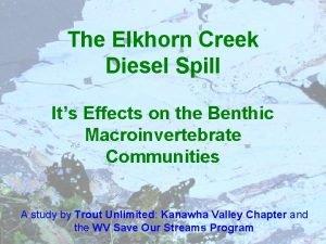 The Elkhorn Creek Diesel Spill Its Effects on