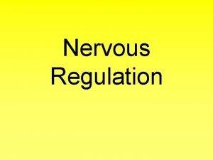 Nervous Regulation Brain Organ of the Central Nervous
