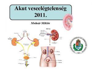 Akut veseelgtelensg 2011 Molnr Mikls A vese funkcii