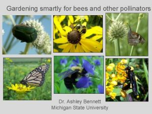 Gardening smartly for bees and other pollinators Dr