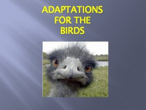 ADAPTATIONS FOR THE BIRDS Adaptations are special characteristics