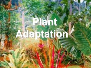 Plant Adaptation Adaptation Living things are adapted to