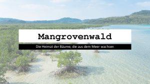 Mangrovenwald Die Heimat der Bume die aus dem
