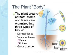 The Plant Body The plant organs of roots