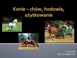 Konie chw hodowla uytkowanie Elearning Marcin Gobiewski Znaczenie