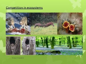 Competition in ecosystems Energy in Ecosystems Relationships in