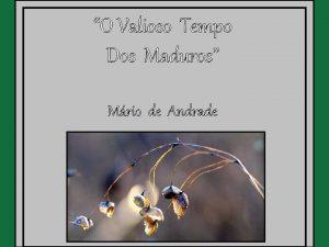 O Valioso Tempo Dos Maduros Mrio de Andrade