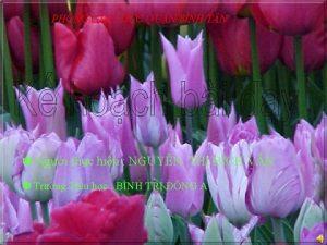 PHNG GIO DC QUN BNH T N Ngi