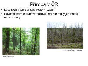 Proda v R Lesy tvo v R asi